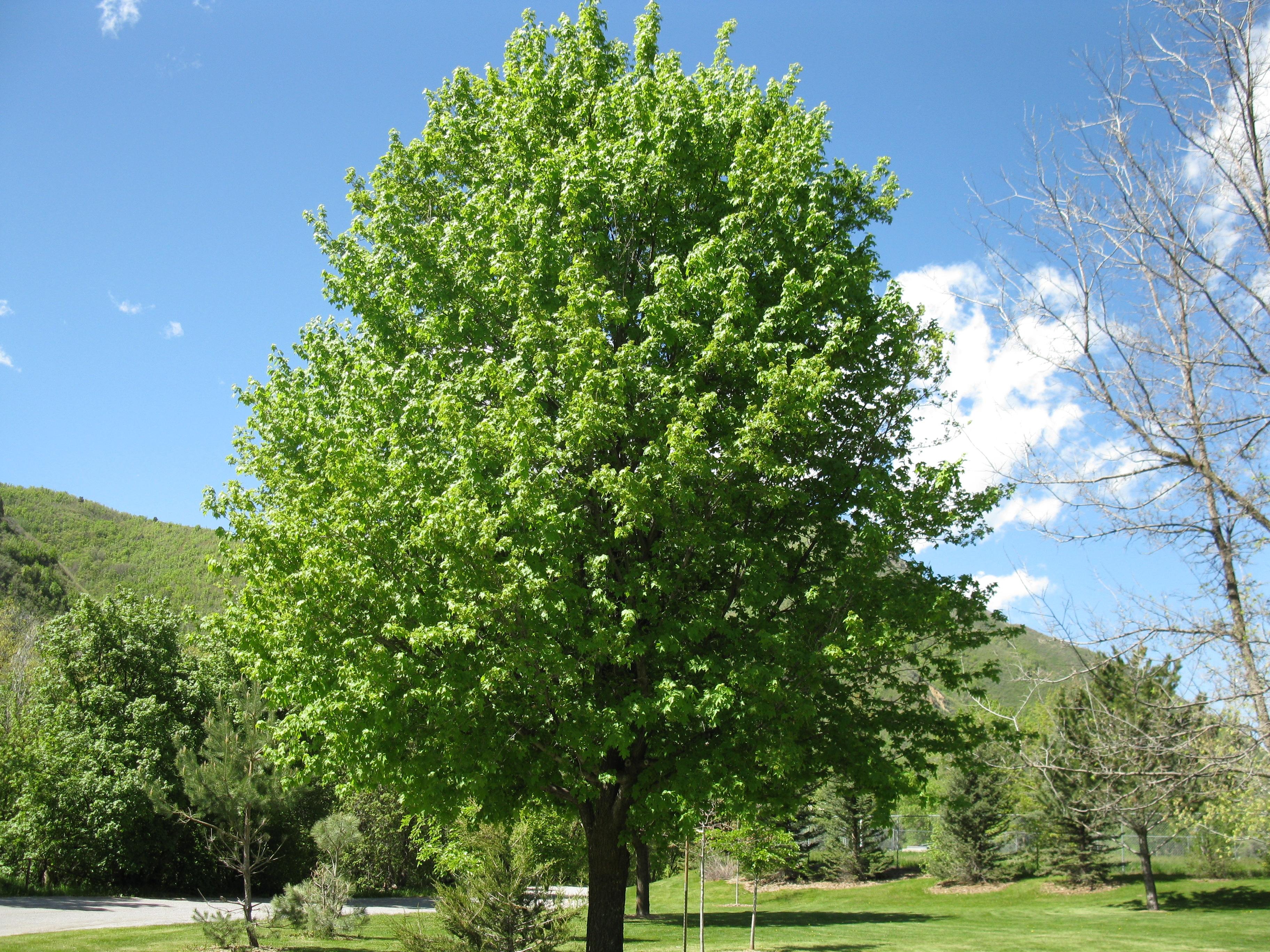 Alberi Ornamentali Da Giardino alberi e arbusti della flora mediterranea | manifra'