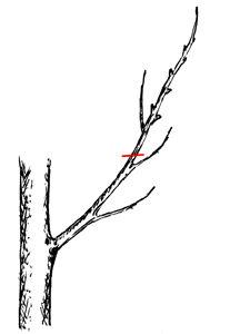 potatura arbusti